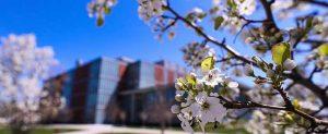 CMU campus in spring