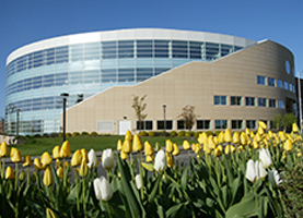 Library Exterior with Spring Tulips