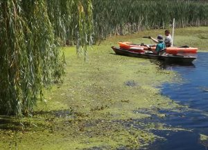 Canoes - Aquatic Invasive Species in Michigan